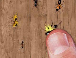 تحميل لعبة سحق النمل مجانا
